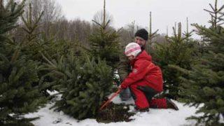 Срубить елку