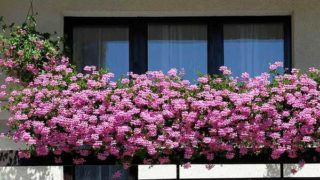 Конкурс Лучший балкон