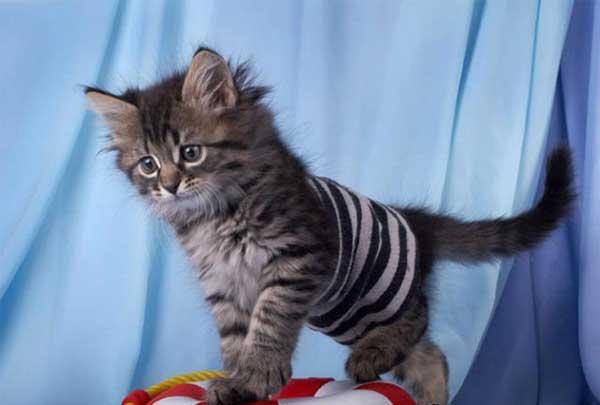 Всемирный день петербургских котов и кошек | dpcity.ru
