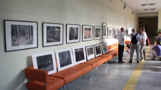 Выставка Кирилла Бугаева