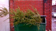 Выброшенная елка